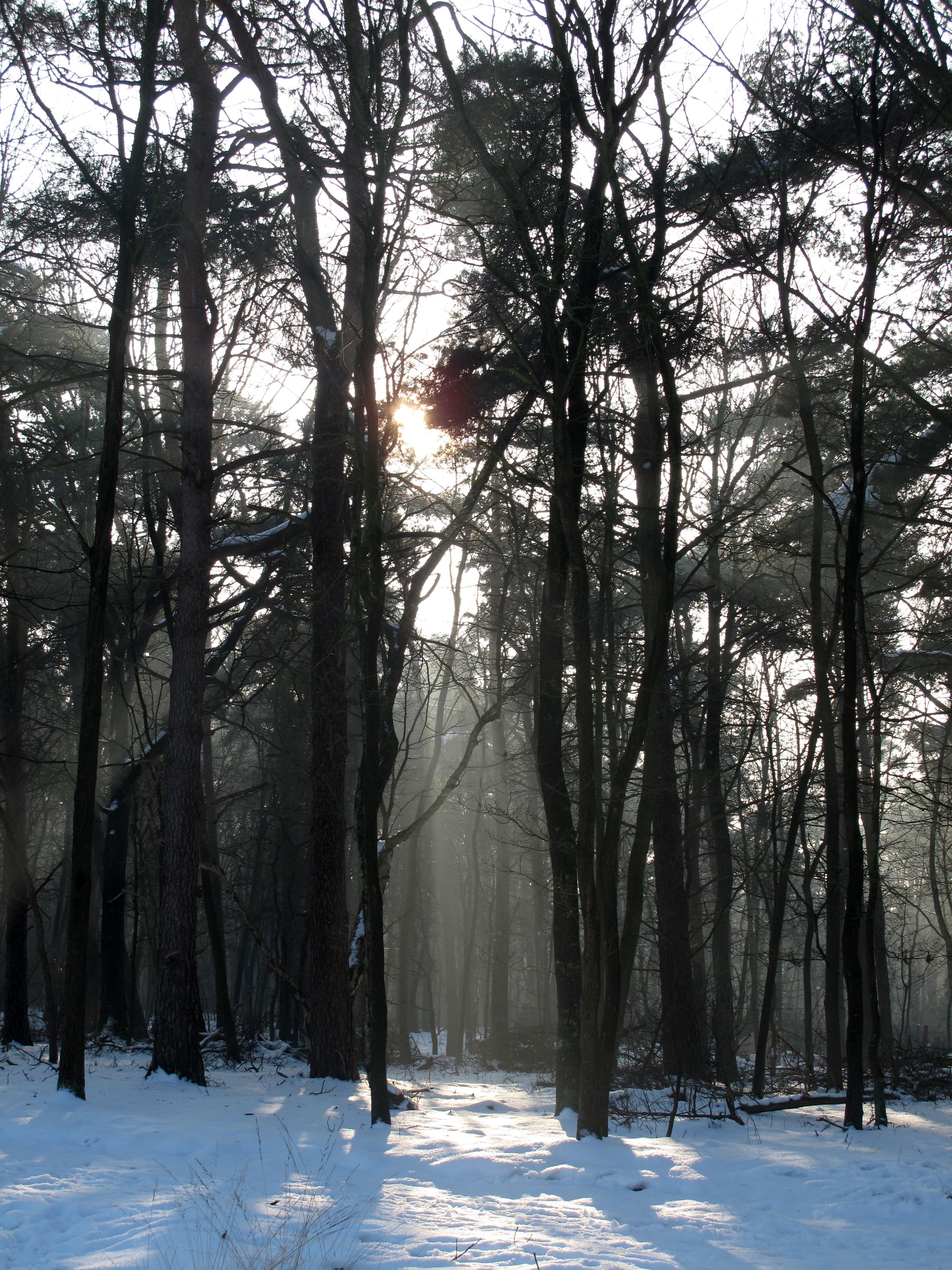 """Neve"" 60 x 45 cm. photo (2012) edition of 8"
