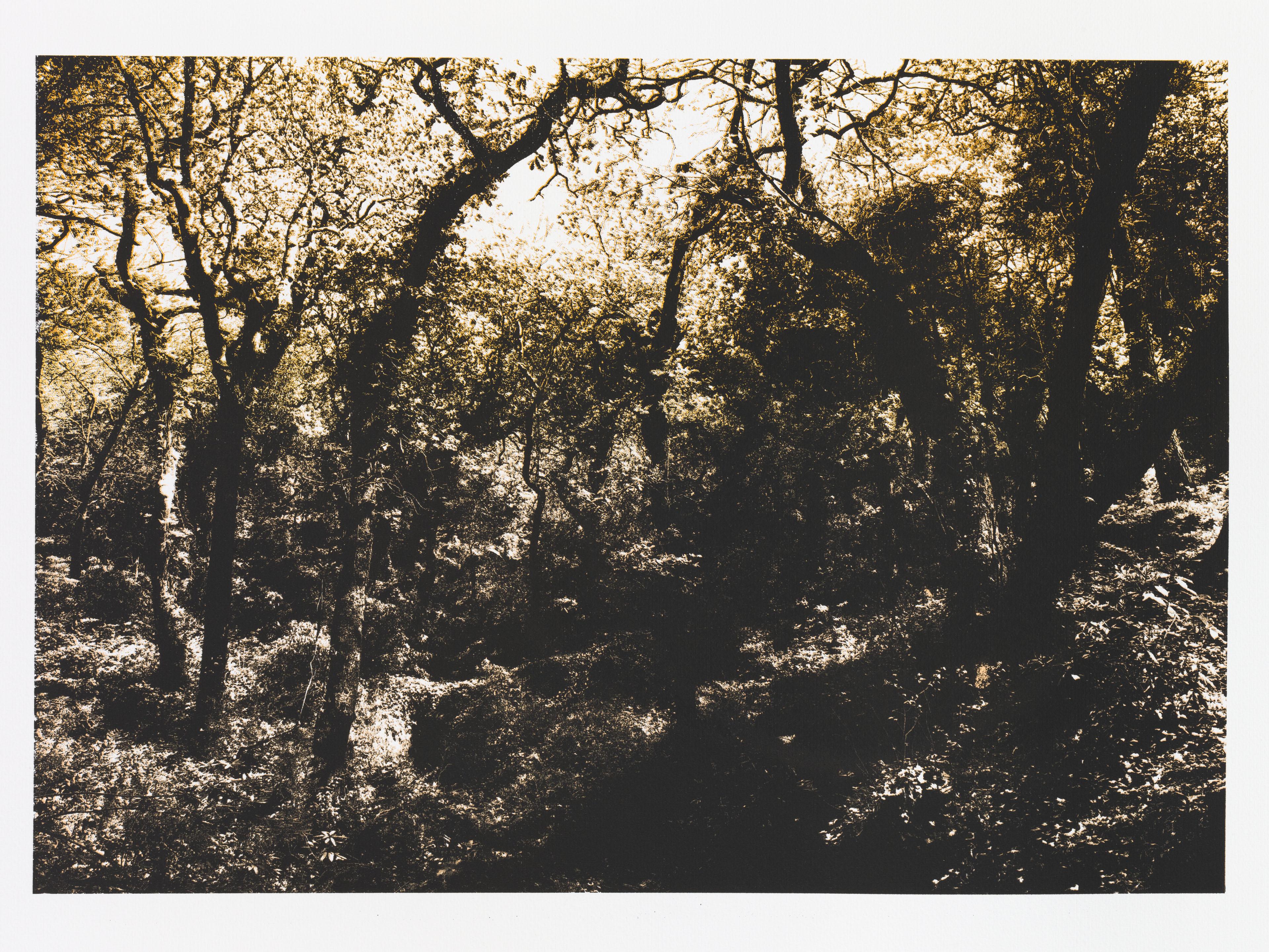 """""""So os caminhos eram meus XI"""" 50 x 70 cm. silkscreenprint (2013)t"""