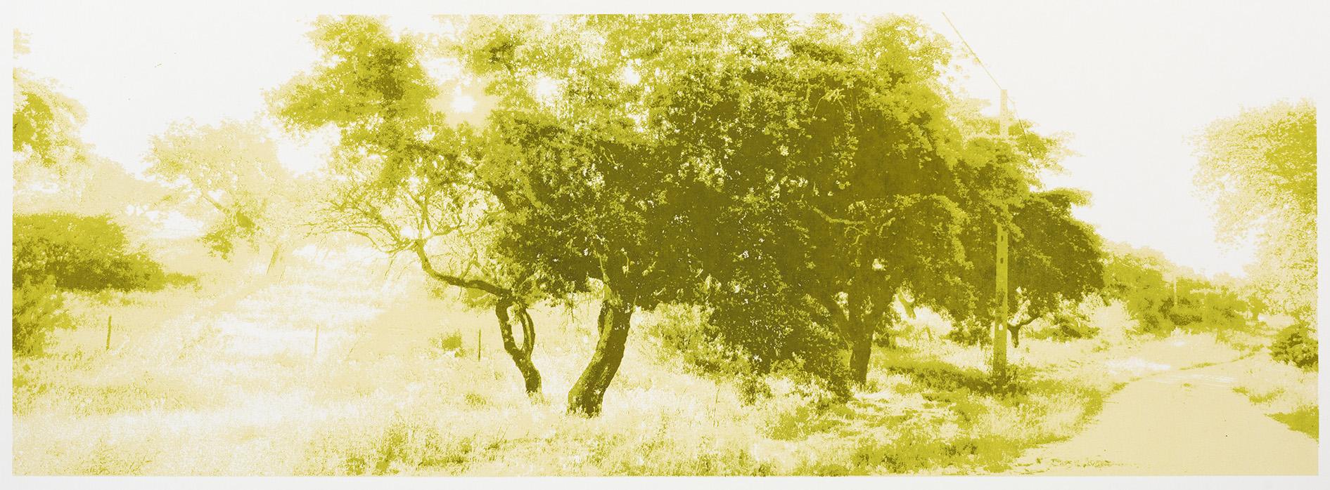 """Change of Seasons III (summer), 35 x 100 cm., silkscreenprint (2015)"