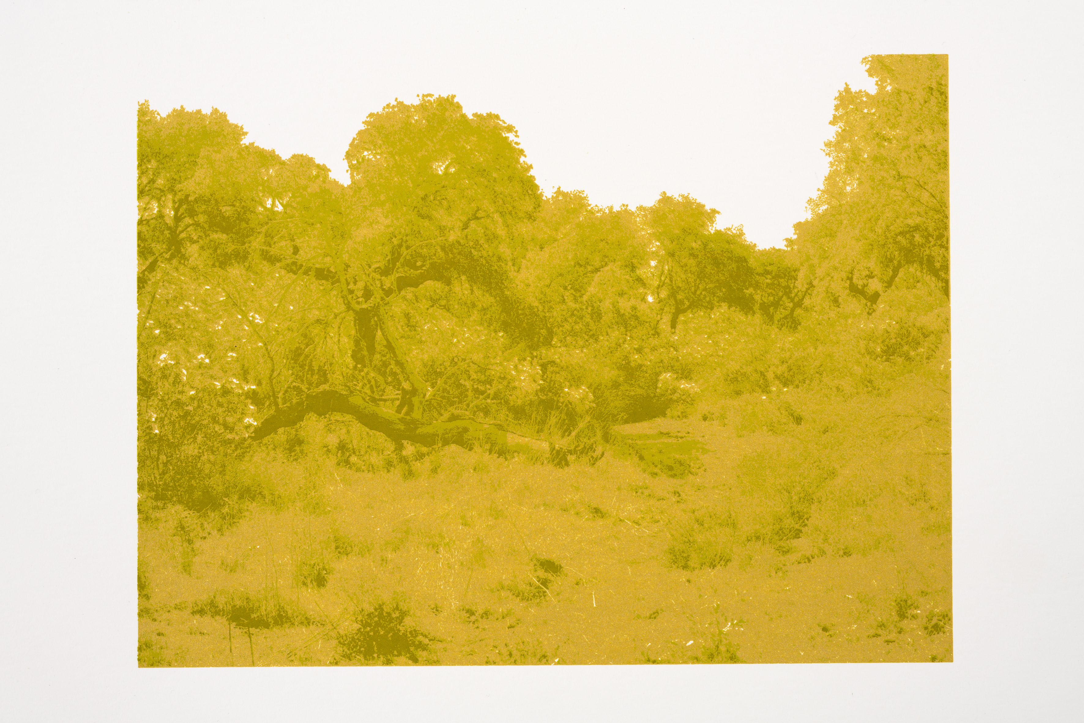 """Z.t."", (2019), 24 x 37 cm., three color silkscreenprint (Printed at Beeldenstorm/Daglicht 2019)"