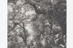 """Floresta"" 51 x 33 cm. toyobo print (2014)"